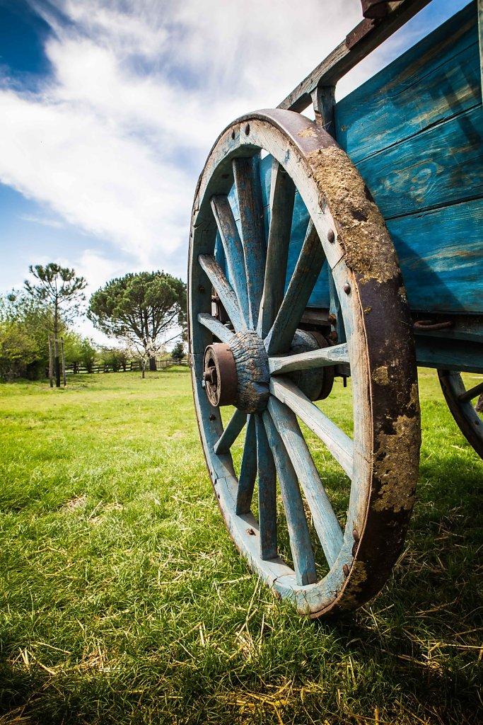 La roue du carrosse #marqueze dans les #landes // 2015 // © F.L
